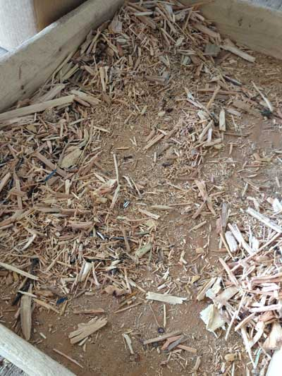 Nails and small wood chips
